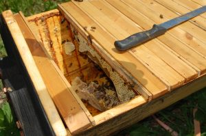 Natural model beehive with honeycomb inside - 2