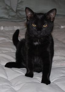 We soon realized that we had another smiling black cat. (Photograph by Stephanie C. Fox)