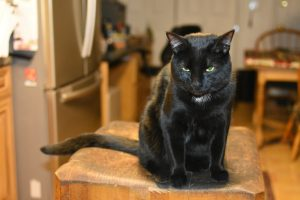 Cherie atop the kitchen butcher block, watching us cook. (Photograph by Stephanie C. Fox)