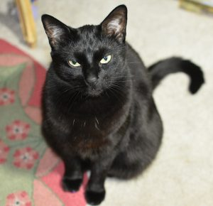 Here is Phantom, all grown up, still demanding constant attention. (Photograph by Stephanie C. Fox)