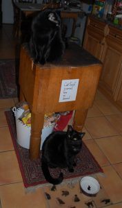 The cats' dining area. (Photograph by Stephanie C. Fox)
